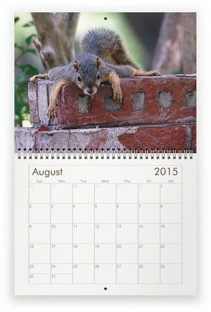 2015 Squirrels wall calendar