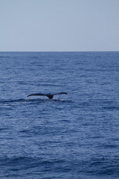 Hawaii2012-1145.jpg