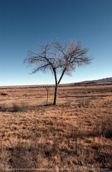 trees-bosque_del_apache_nm-01dec06-9798