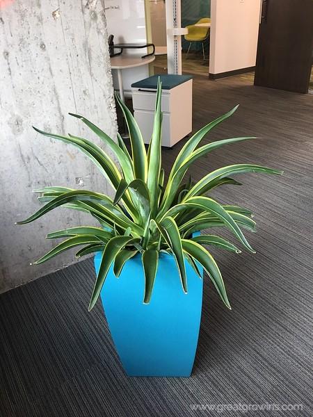 Emarsys Cactus.jpg