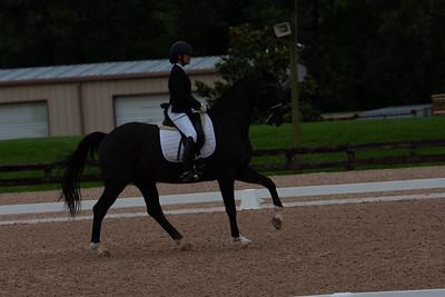 Horse 421