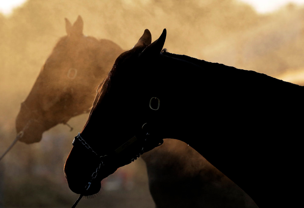 . Steam rises as horses are washed after their morning workouts at Churchill Downs Tuesday, April 30, 2013, in Louisville, Ky. (AP Photo/Charlie Riedel)