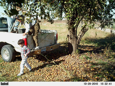 The Peculiar Pear Pickers