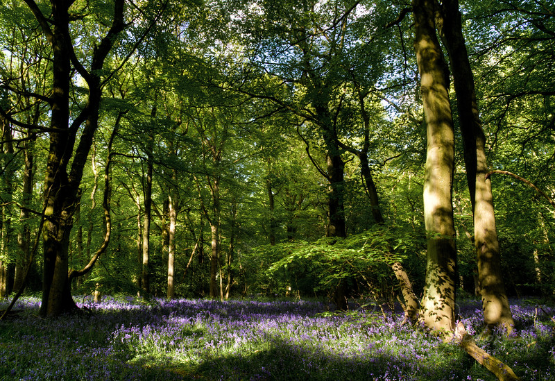 staffhurst woods--5.jpg