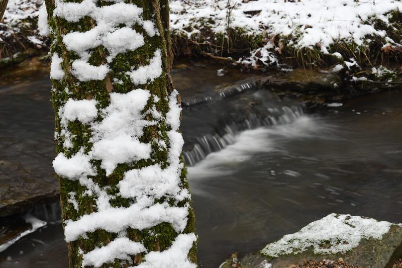 Snow on Mossy Tree