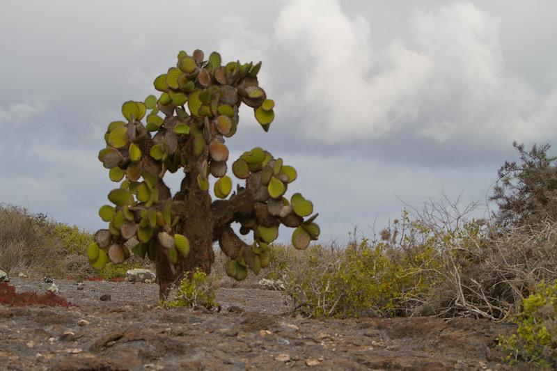 Cactus Tree S Plaza.jpg