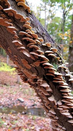Omega fungi, etc.