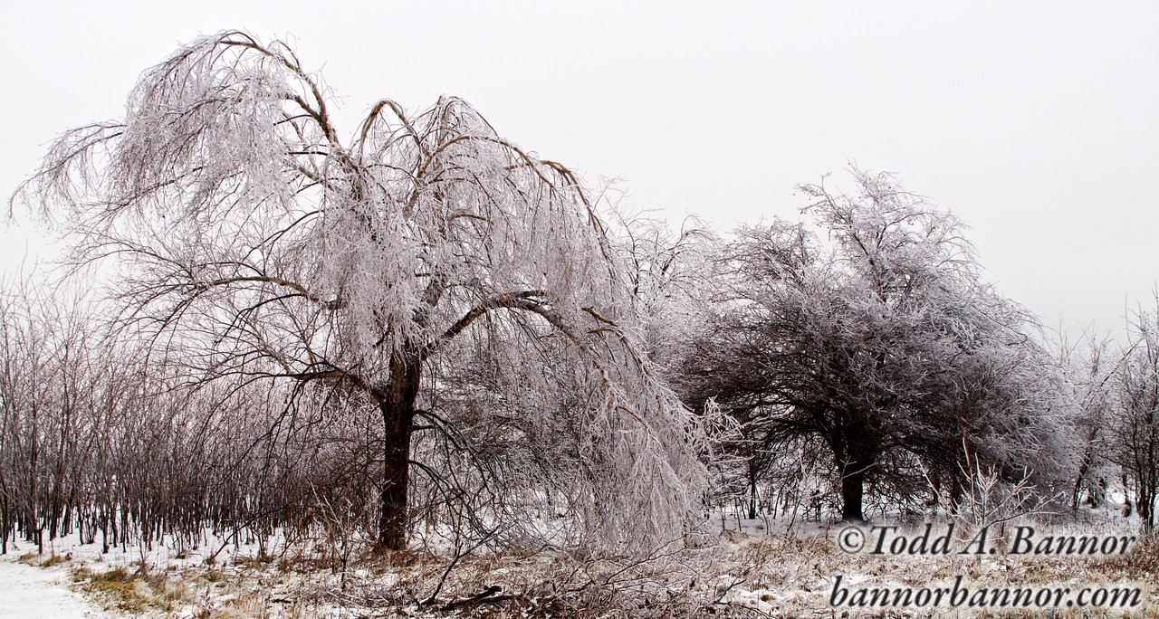 Ice Storm Aftermath. Near Kankakee, Illinois.