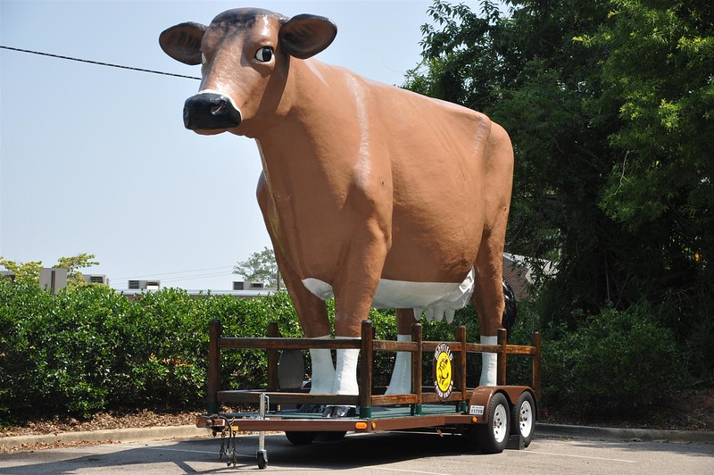 the Mayfield cow.jpg