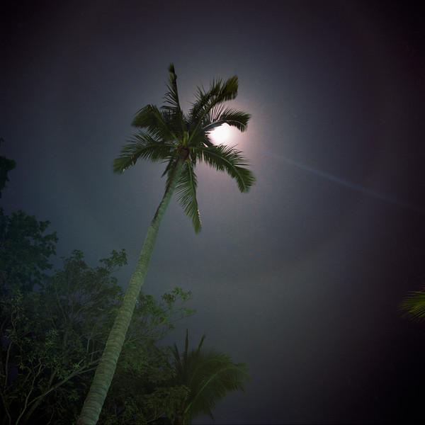 Moonlit Palm - Contadora - Panama