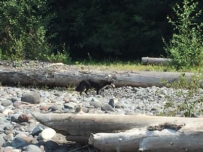 Mt Rainier camping 2015
