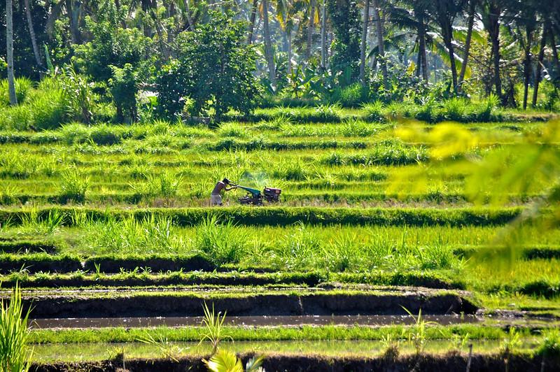Bali-604.jpg