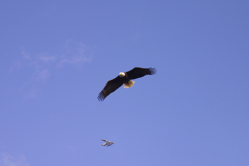 eagles from disc 014.jpg