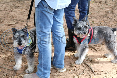 9/30/18 Christ Church Episcopal Hosts Blessing Of The Animals by Lisa Pierce