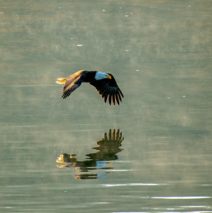 3.16.21 Woodland Eagles Morning