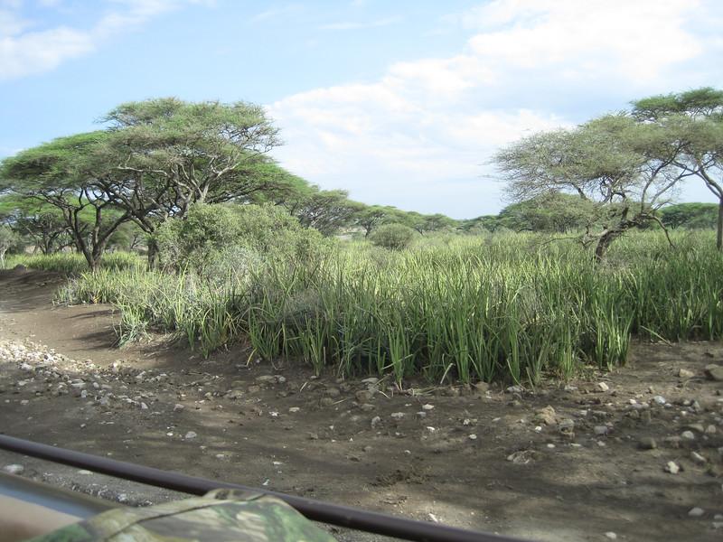 Tanzania14-3431.jpg
