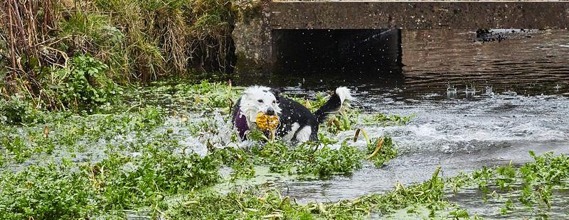 Water Medow-3608.jpg