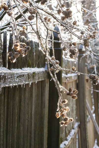 icestorm (13 of 13).JPG