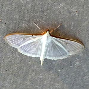 Moths - 2017