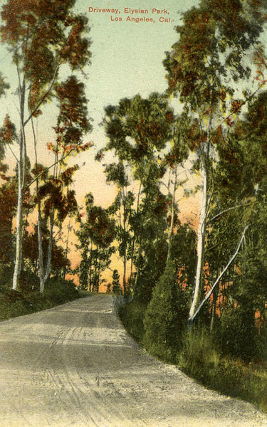 Scenic Road Postcard