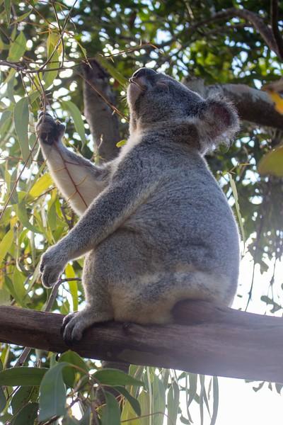 Australia_300.jpg