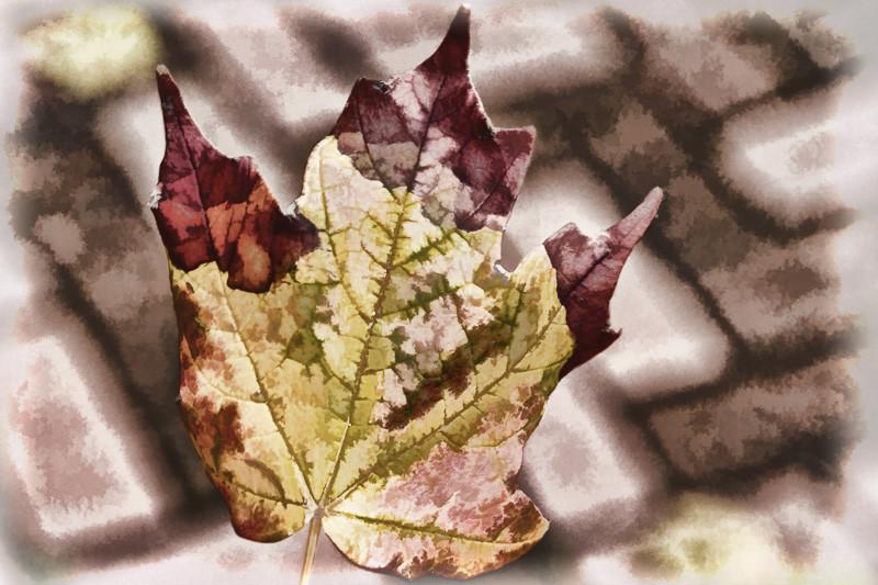 October 13 - Fall leaf in Washington DC.jpg