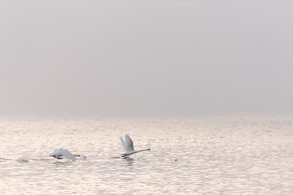 Birds in Flight Series
