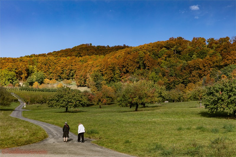 2016-10-22 Herbststimmung Aargau 0U5A1051.jpg