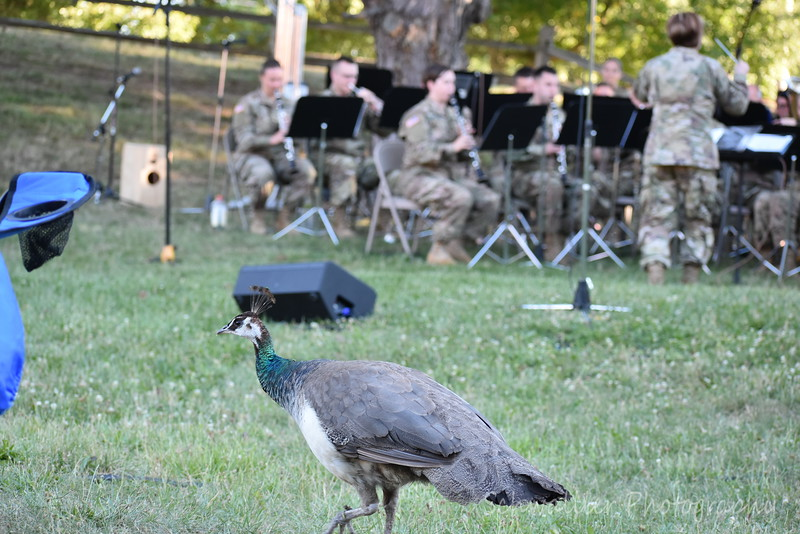 2018 - 126th Army Band Concert at the Zoo - Show Time by Heidi 193.JPG