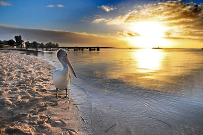 Sunset at Paradise, Monkey Mia, WA
