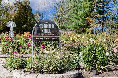 MI-Midland-Dahlia Hill