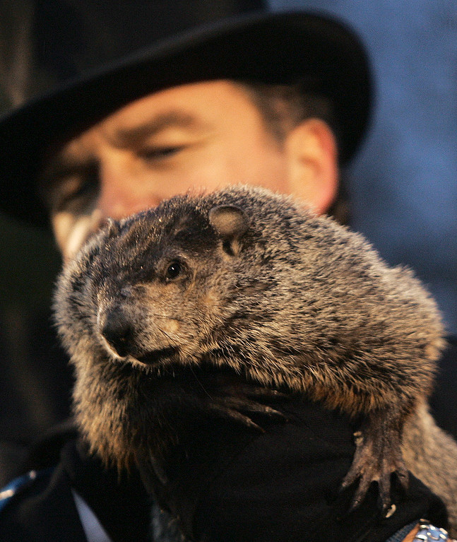 . John Griffiths, one of the handlers of weather predicting groundhog Punxsutawney Phil, holds Phil on Ground Hog\'s Day in Punxsutawney, Pa. on Saturday, Feb. 2, 2008. The Groundhog Club said Phil saw his shadow and predicted six more weeks of winter. (AP Photo/Keith Srakocic)