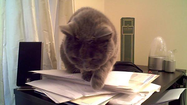 kesha sits on computer case.AVI