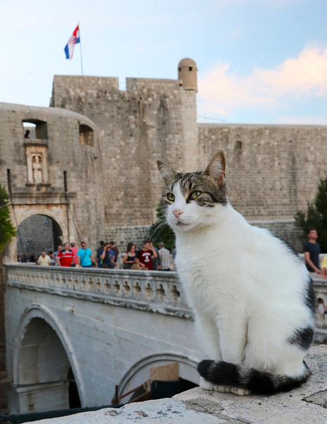 Cat guarding the Pile Gate - the main city gate of Dubrovnik, built in 1537