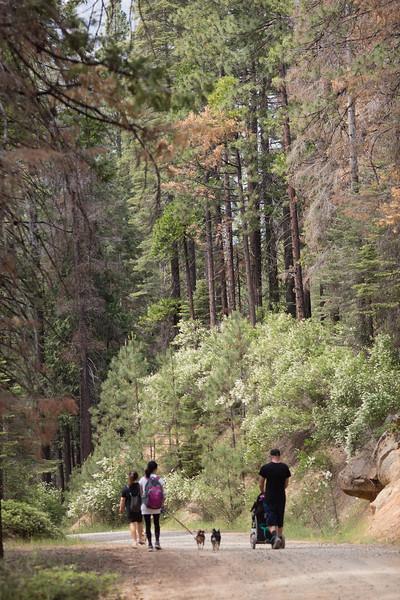 Yosemite_2016-24.jpg
