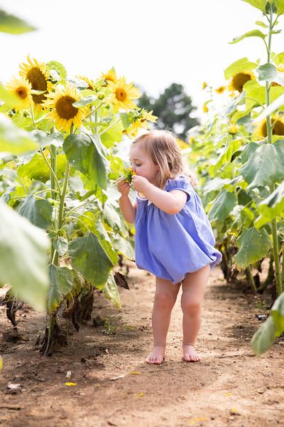 sunflowers_23.JPG