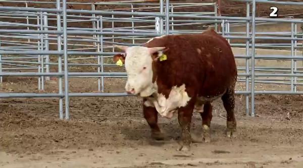 2015 WCA Bull Test Sale