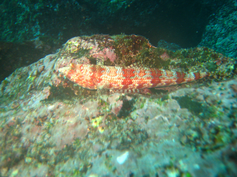 Diving in the Galapagos (319 of 392)