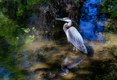 Birds and Wildlife