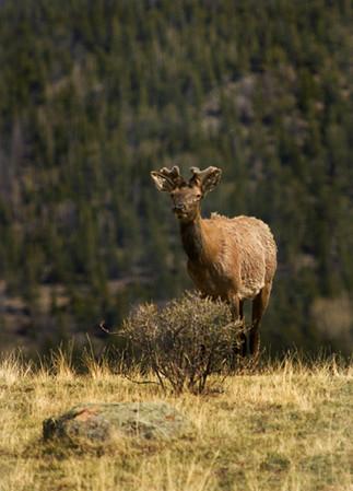 Rocky Mtn. National Park