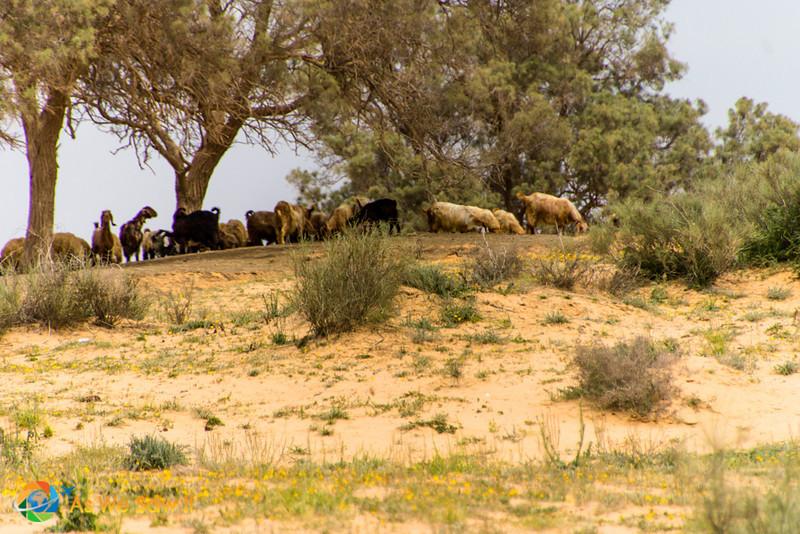 Desert-of-Zin-0693.jpg