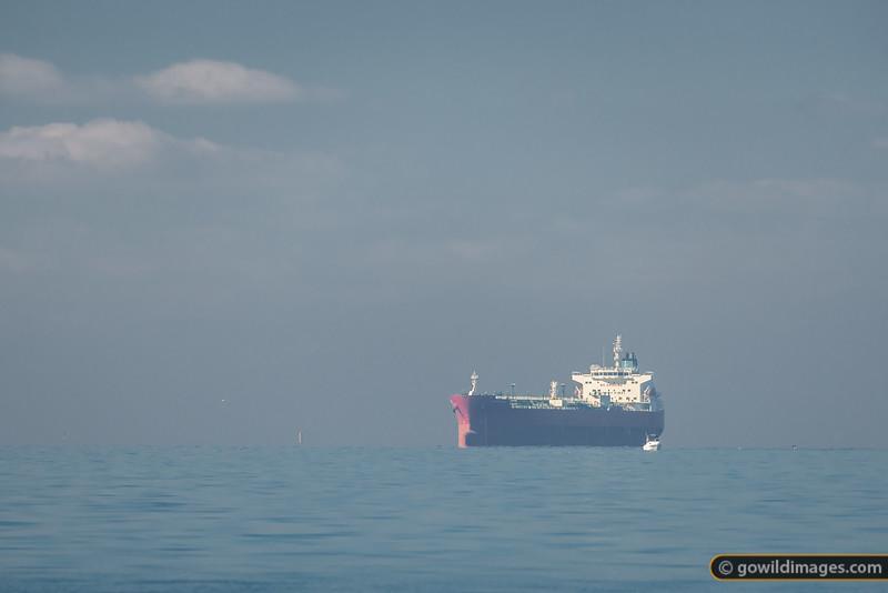 Port Phillip Shipping