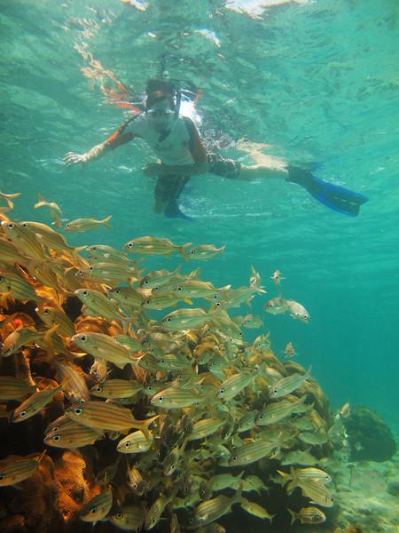 brent snorkelling above fish.jpg