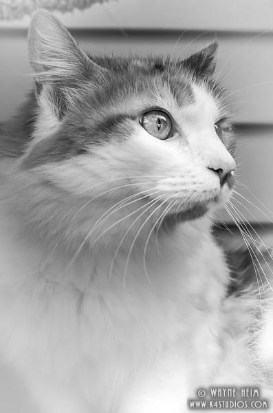Handsome    Photography by Wayne Heim