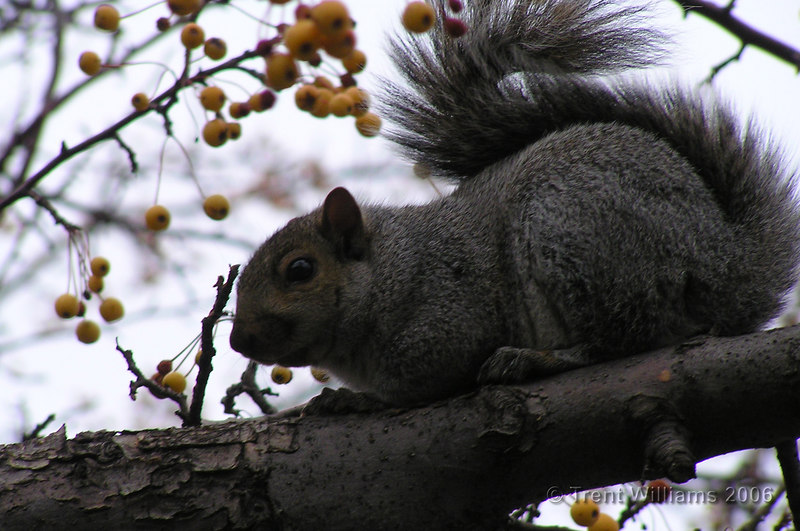 A squirrel posing in a tree.