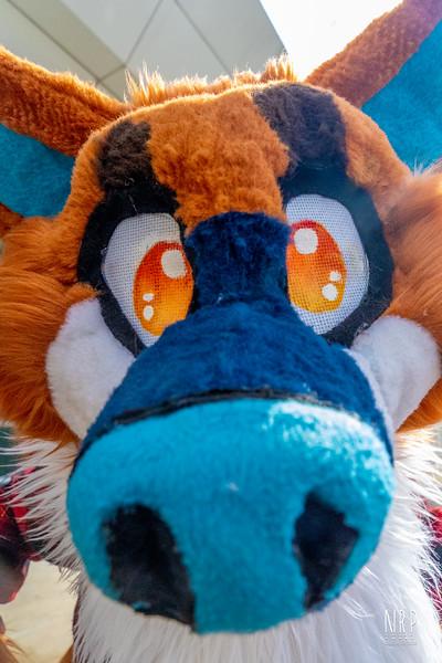 Smallz The furry Friend (28 of 71).jpg