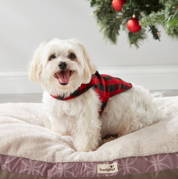Dog_Sweaters_RoomSet_GL_170921_094.jpg