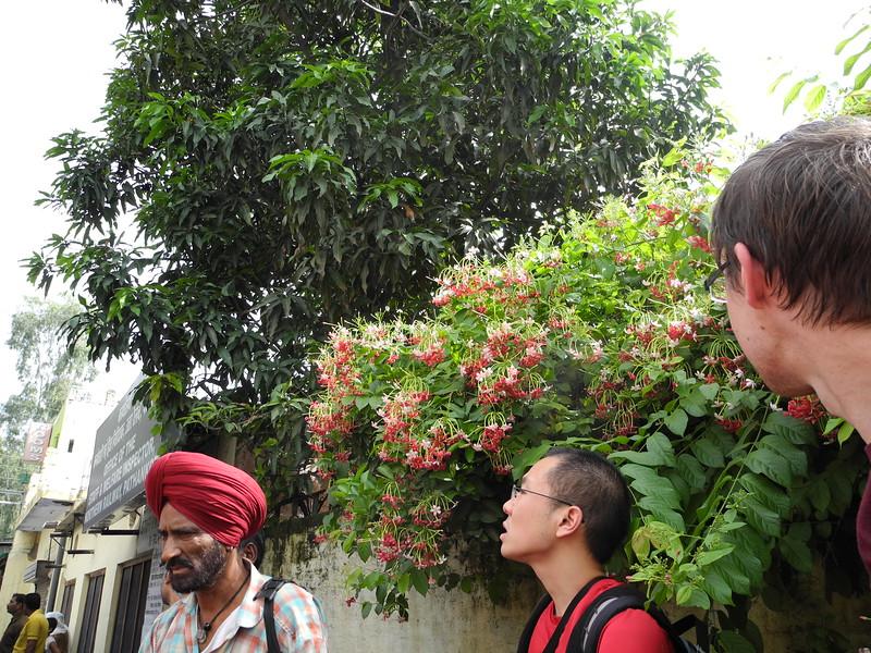 india2011 060.jpg