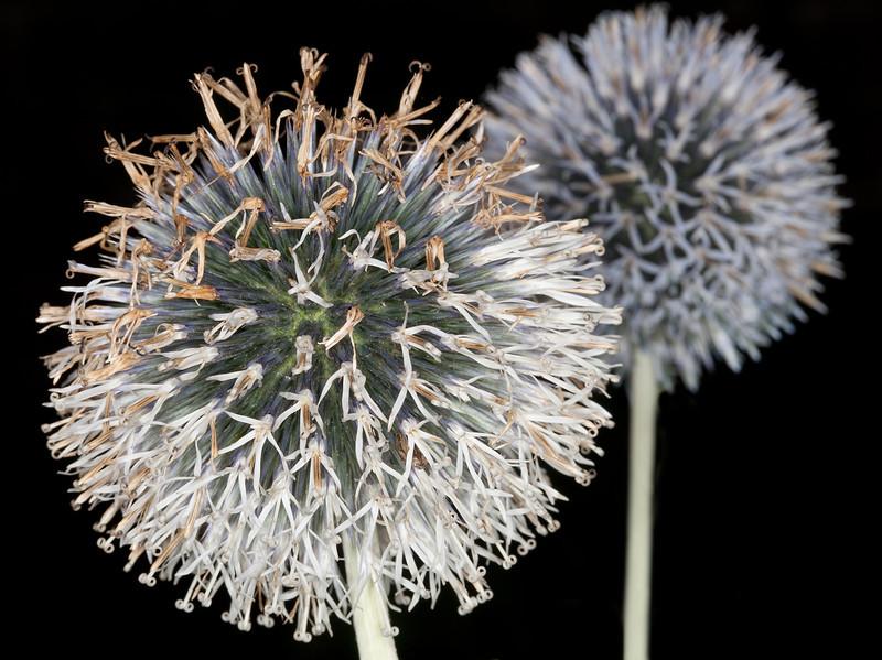 Two flowers_4978052372_o_8179008227_o.jpg