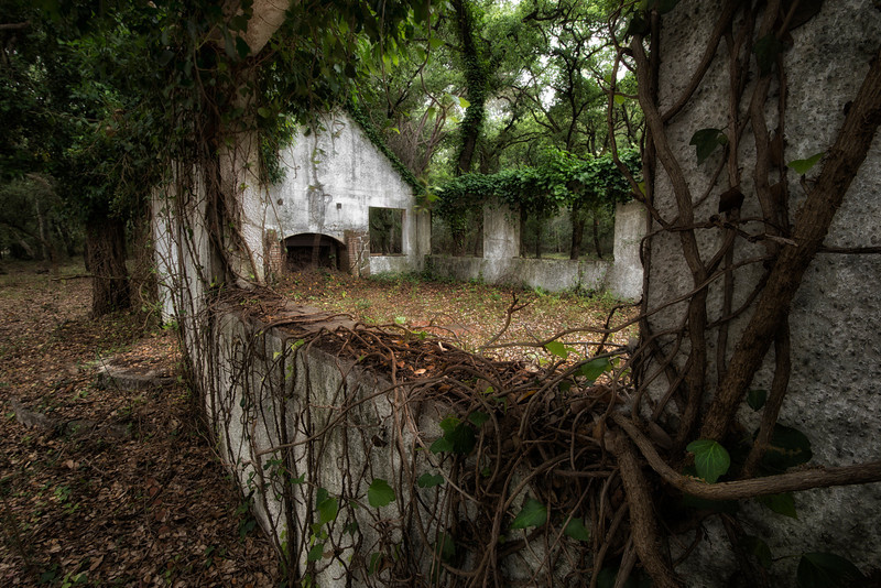Abandoned farm house in the middle of a forest.